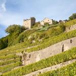 Caves Ouvertes 2015 – Suisse romande