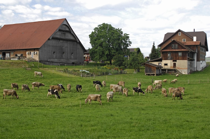 government plan to cut swiss farm aid causes friction in bern