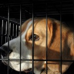 Products tested on animals to be banned in Switzerland