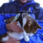 New Swiss police cat