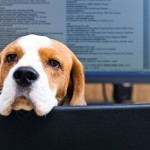 Would you like to take your dog to work? Staff at Nestlé can.