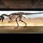 World-renowned dinosaurs move into Geneva's Natural History Museum
