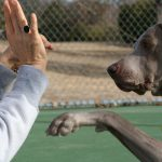 No more compulsory training for dog owners