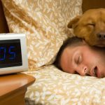 50 percent of Swiss sleep with their pets, estimates vet