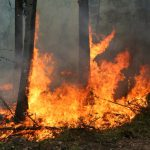 Forest fires in Ticino and Graubunden now under control