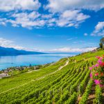 Swiss wine consumption declines to 40 bottles per person