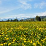 46 percent of Switzerland's plant and animal life at risk from human activity