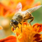 How bees add 350 million francs to the Swiss economy