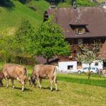 Swiss agricultural policy costs households 2,500 francs a year, according to study