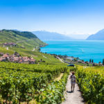 Swiss 2020 grape harvest modest but excellent