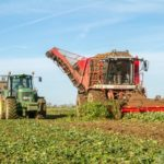 Government resists call to use banned insecticide to save Swiss sugar beet