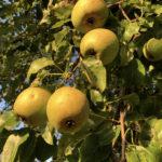 Bio Suisse rejects anti-pesticide initiative in favour of its margins
