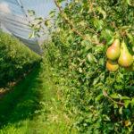 Swiss anti-pesticide votes fail – 13 June 2021